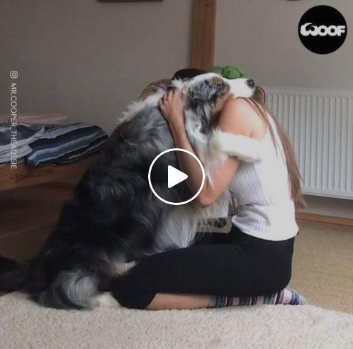 The Unconditional Love Of A Dog